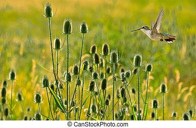 Hummingbird over summer background