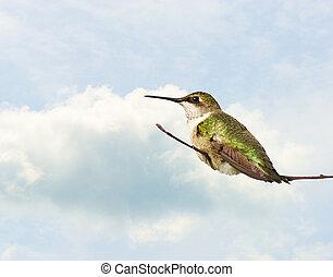 Hummingbird perched.