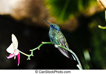 hummingbird perched on a branch of orchid