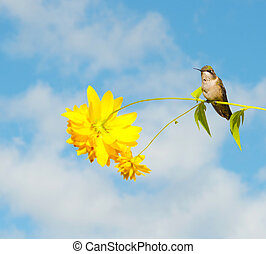 Hummingbird perched on flower.