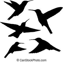 hummingbird silhouettes - set of five detailed black...