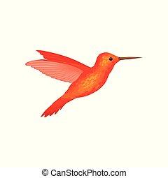 Hummingbird, tiny colibri with bright orange plumage vector Illustration on a white background