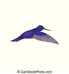 Hummingbird, tiny colibri with bright sapphire plumage vector Illustration on a white background