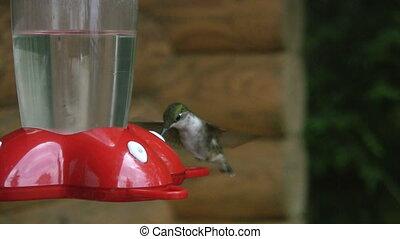 Hummingbird vs. Wasp.