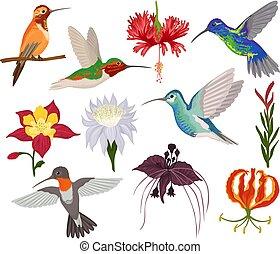hummingbird, wektor, tropikalny, brzęczący, ptak, litera, z, piękny, ptaszyna, skrzydełka, na, egzotyczne kwiecie, w, flowering, natura, ilustracja, komplet, od, przelotny, humming-bird, w, zwrotnik, odizolowany, na białym, tło