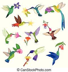 hummingbird, wektor, tropikalny, brzęczący, ptak, litera, z, piękny, ptaszyna, skrzydełka, na, egzotyczne kwiecie, w, natura, dziewiczość, ilustracja, komplet, od, przelotny, humming-bird, w, zwrotnik, odizolowany, na białym, tło