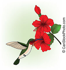Hummingbird with red flower - Vector Illustration Of...