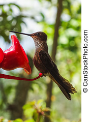 Hummingbirds at the feeder in cocora valley