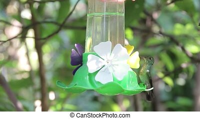 hummingbirds fluttering and drinking water