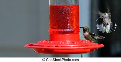 hummingbirds - Hummingbirds on feeder in rural georgia usa