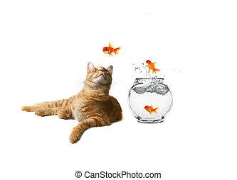 humorístico, imagem, de, gato, observar, escapando, peixe