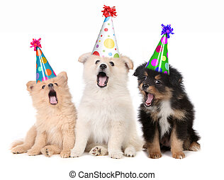 Humorous Puppies Singing Happy Birthday Song Wearing Silly Hats