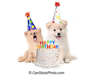 Puppies Singing Happy Birthday Song With Cake