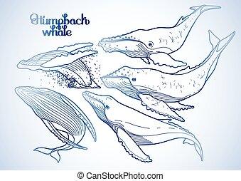 humpback, grafico, balene