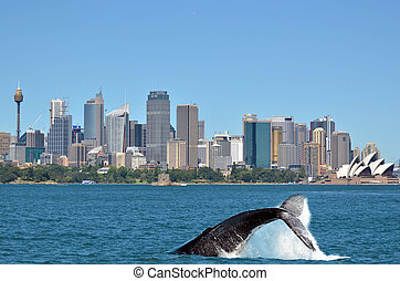 Humpback Whale against Sydney skyline in New South Wales...