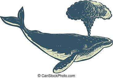 humpback-whale-blowing-water-scratchboard