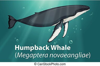 Humpback whale in deep ocean