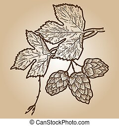 Humulus sketch scratch board imitation. Sepia hand drawn image. Engraving vector illustration