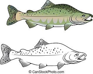hunchback, peixe, salmão