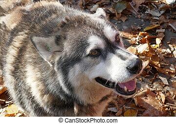 hund, abkommen, abirren, sich entfernen, richtung ändern, sich unterscheiden