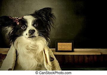hund, als, lehrer, oder, schueler, m�dchen, denken, urlaub