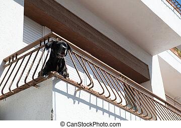 hund, an, balkon