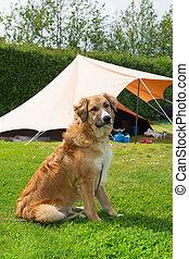 hund, an, campingplatz
