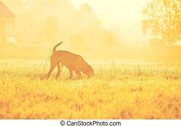 hund, an, der, sonnenaufgang