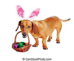hund, angekleidet, als, kaninchen, mit, osterkorb