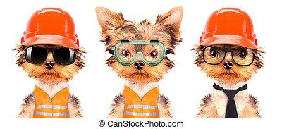 hund, angezogene , als, bauunternehmer