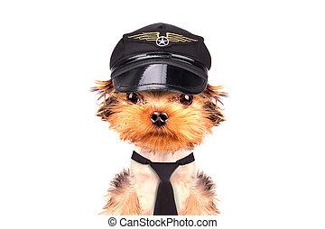 hund, angezogene , als, pilot