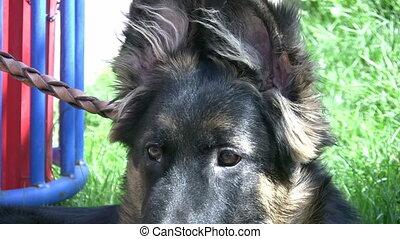 hund, anschauen kamera