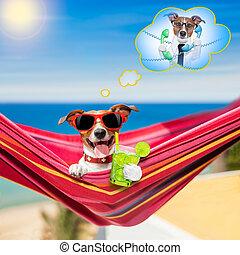hund, auf, hängemattte, in, sommer