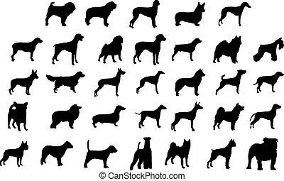 hund, aveln, silhouettes