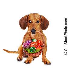hund, besitz, osterkorb, mit, bunte, eier