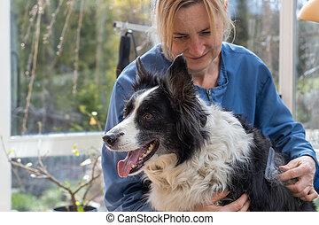 hund, collie, ansicht, seite, pflegen, umrandungen