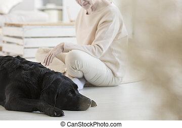 hund, deltagare, i terapi