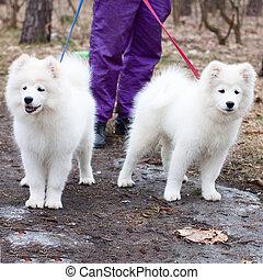 hund, draußen, training, prozess