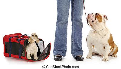 hund, eigentümer