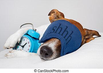 hund, eingeschlafen, mit, wecker, und, schlafen maske