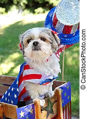 hund, elegant klädd, för, a, 4 av juli, ståta