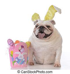 hund, elegant klädd, för, påsk