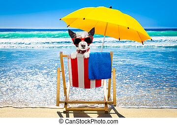 hund, entspannend, auf, a, strandliege