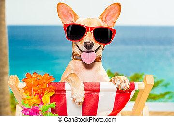 hund, ferie