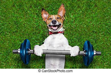 hund, fitness