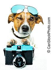 hund, fotokamera