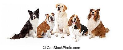 hund, grupp, gemensam, familj, aveln