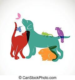 hund, gruppe, haustiere, chamäleon, papagai, -, freigestellt, vektor, hintergrund, katz, weißes kaninchen, papillon, kolibri
