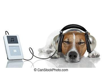 hund, hören musik, mit, a, musikspieler