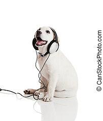 hund, hören musik